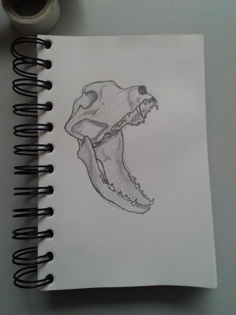 Skull - dog by Kentaan