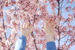 hands and blossoms