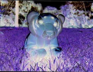 purple tiger- inverted colours