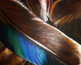 Feathers by snowbringer