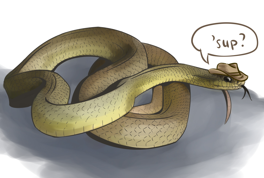 Eastern Yellow bellied racer by snowbringer