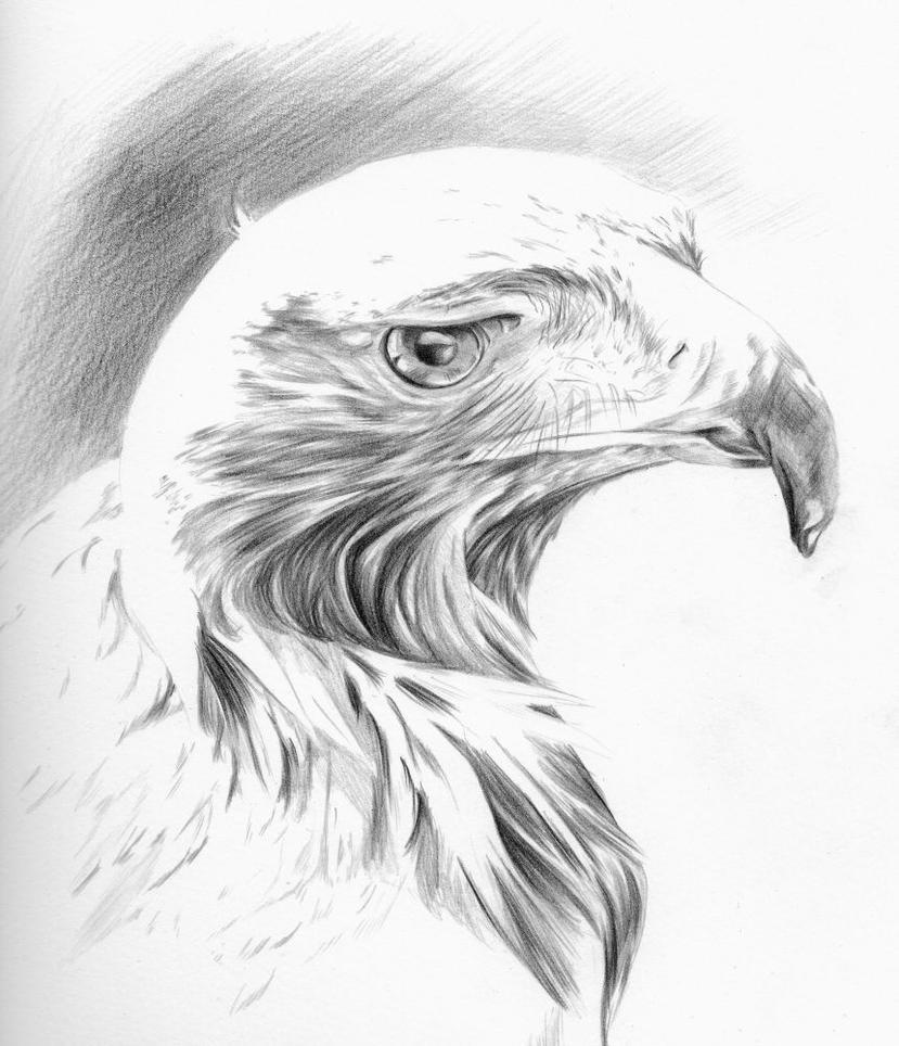 golden eagle study by snowbringer