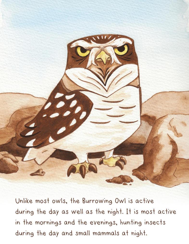 Eyebrow Owl Friday by snowbringer