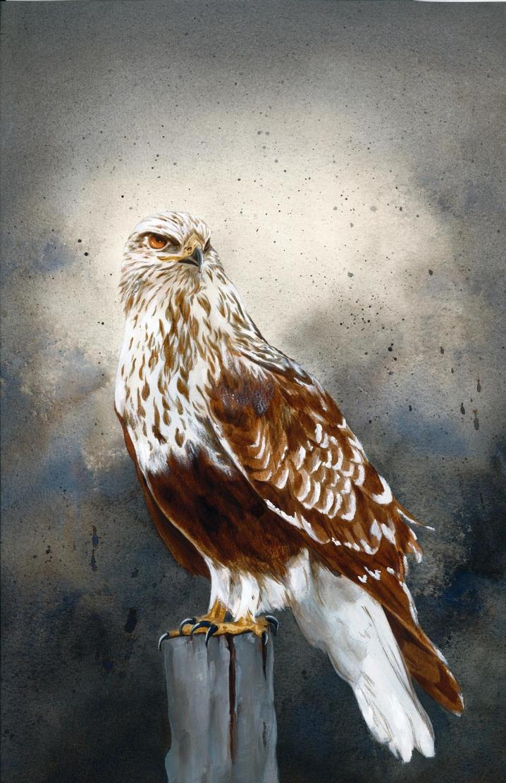 Rough legged hawk by snowbringer