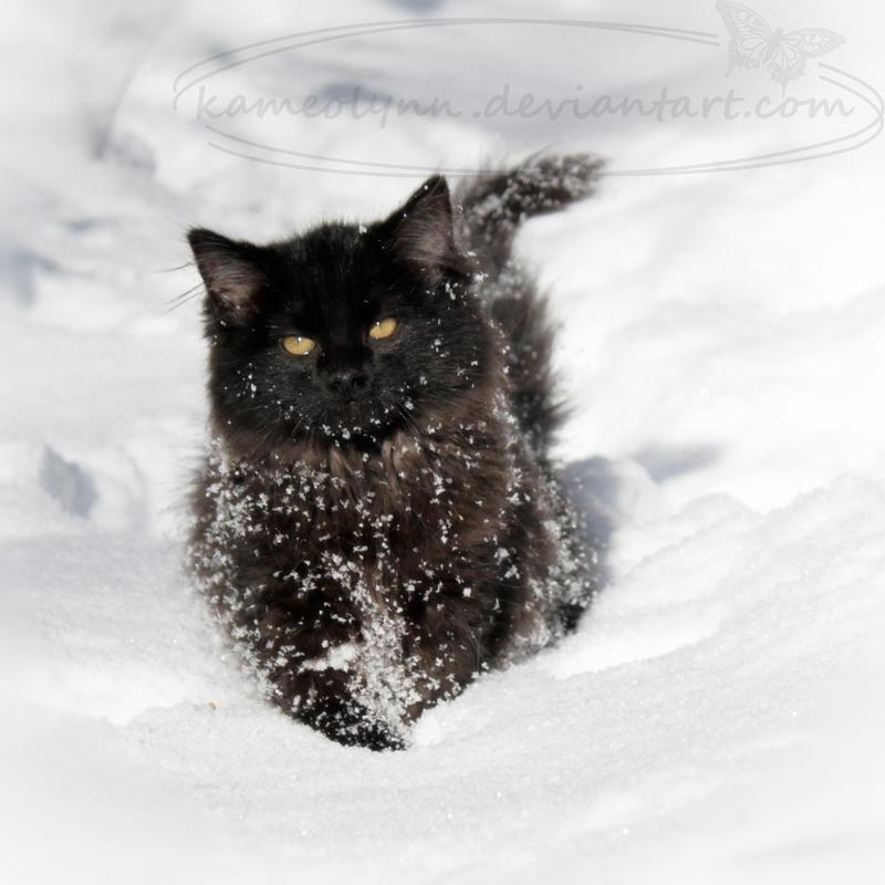 Winter Walk by Kameolynn