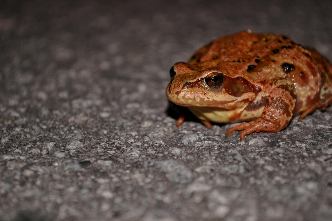 Toad on the Road by Kaera-Neko