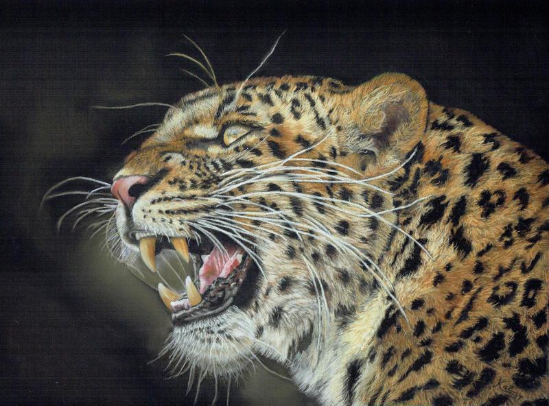 Leopard by wildlifeartbykaz