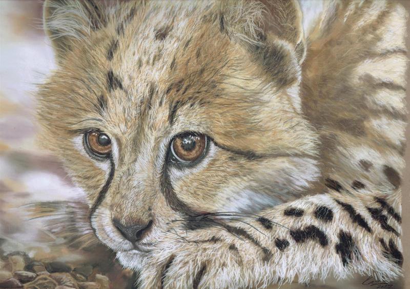 CHEETAH CUB by wildlifeartbykaz