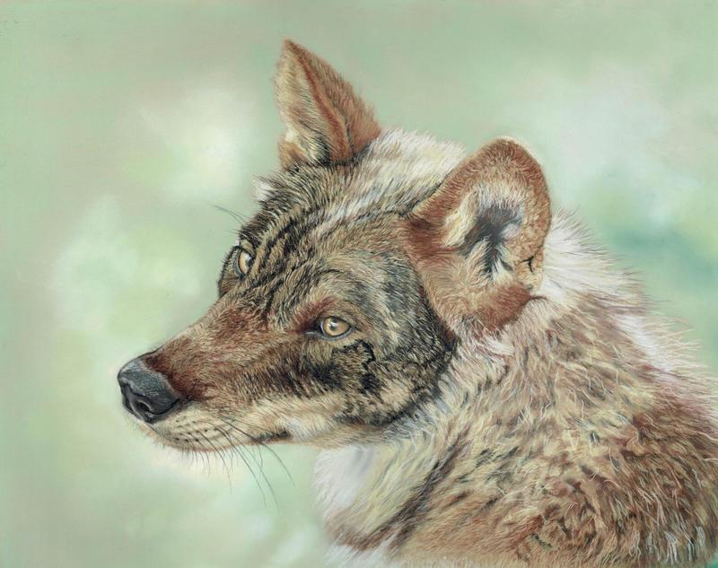 EURASIAN WOLF by wildlifeartbykaz
