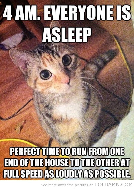 cat maker game