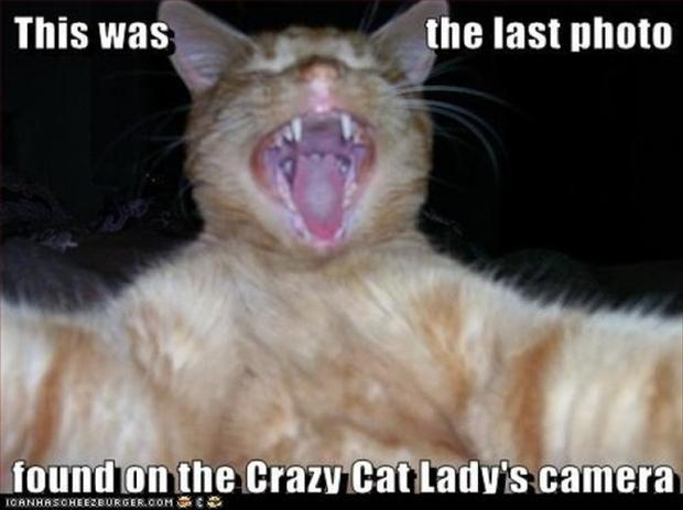 7 Funny Cats #19