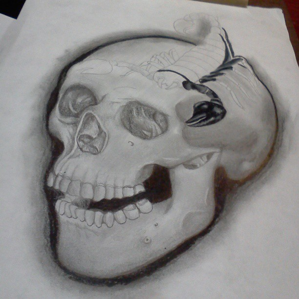 Skull and Scorpion by fbatman666