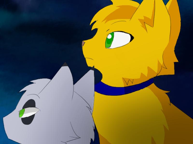 Deviantart More Like   Ssswarriorcats Graypaw