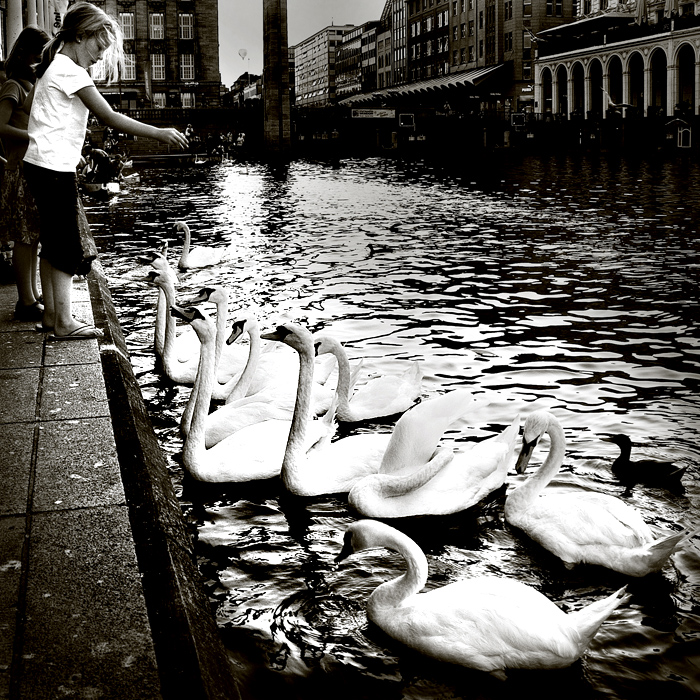 Feed my heart to swans by sican