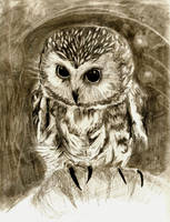Northen Saw-whet Owl - Graphite Pencil by CY-ARTistmonkey