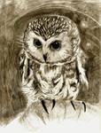 Northen Saw-whet Owl - Graphite Pencil