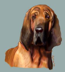 Doggust 12