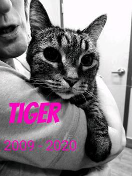 R.I.P. Tiger