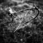 Trap by FlorentCourty