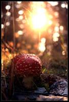 Autumn Shine by FlorentCourty