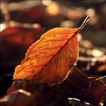 Fallen leaves by FlorentCourty