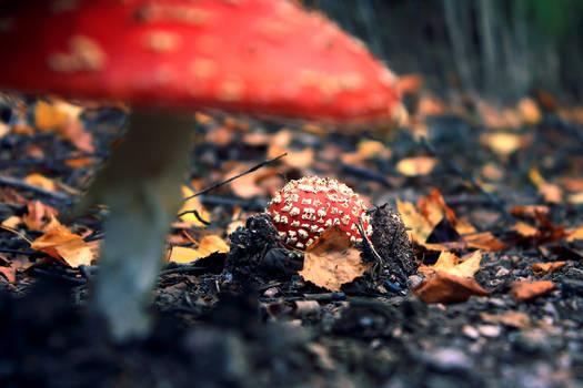 Raise of the Mushrooms