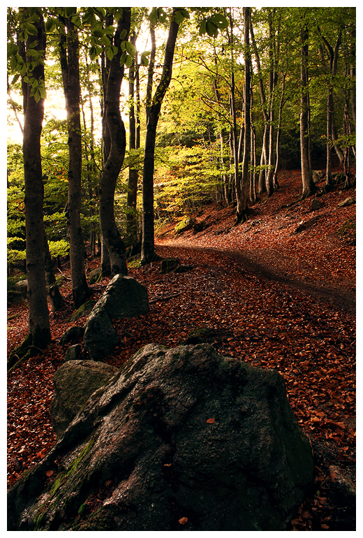 Woods in October. by FlorentCourty