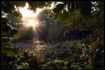 Sunrise Above The Hidden Swamp