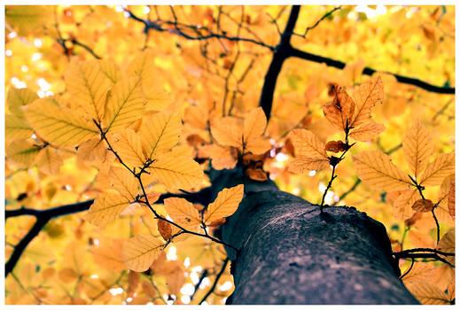 .Autumn Leaves.