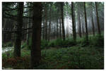 Mist up the Forest.