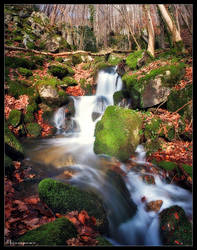 Growing Brook by FlorentCourty