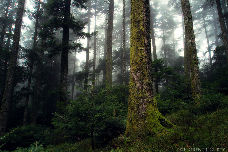Enchanted Woods by FlorentCourty
