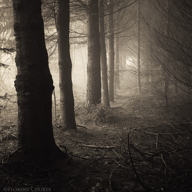 Sorrow by FlorentCourty