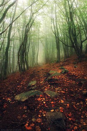 Autumn Rain by FlorentCourty