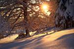 Colors on Frozen Snow