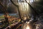Magic Light above the Creek