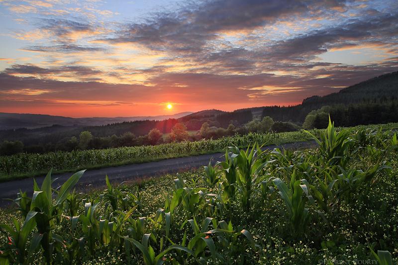 Cornfield Sunset by FlorentCourty