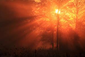 Glowing Sunrays by FlorentCourty