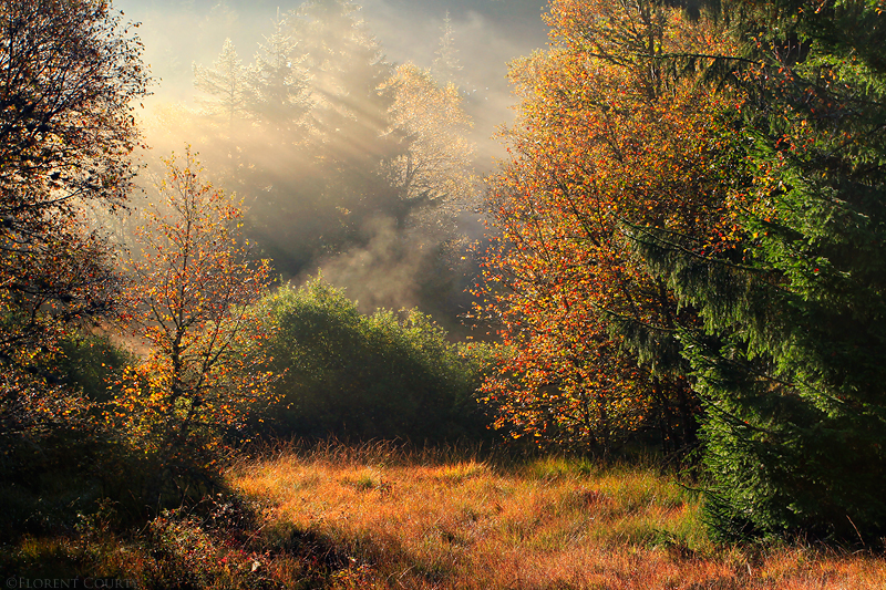Peaceful Autumn Symphony by FlorentCourty