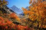 Majestic Autumn