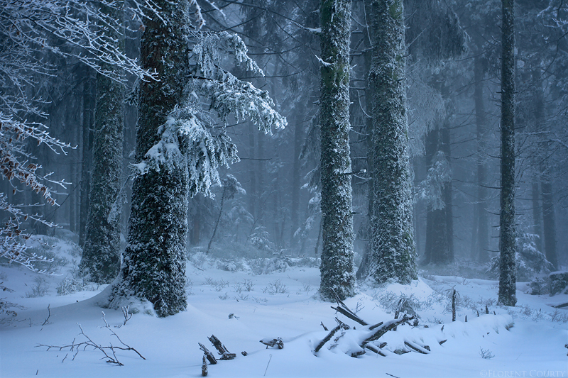 Frozen Forest by FlorentCourty