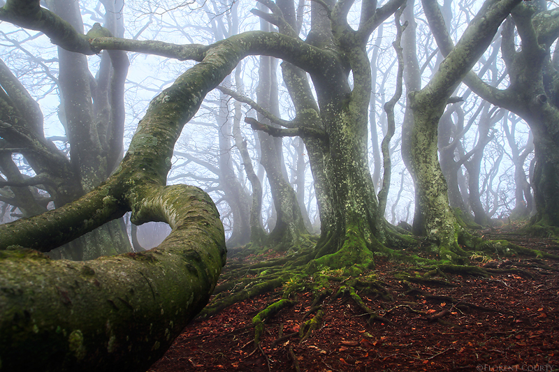 Caught by an Ent by FlorentCourty