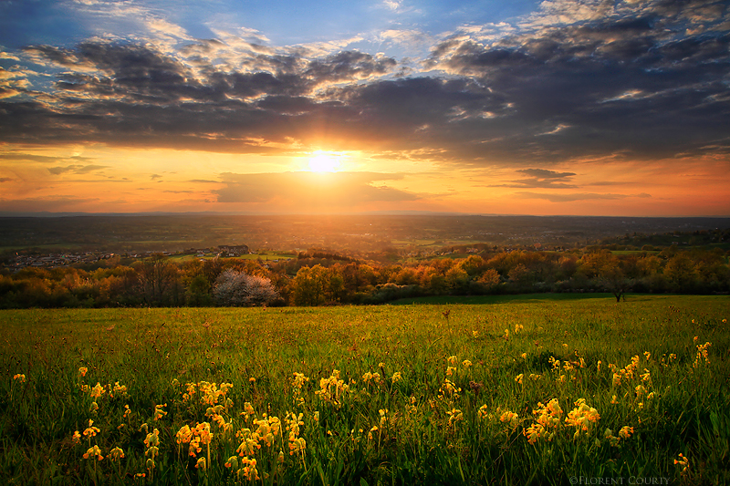 Spring Celebration by FlorentCourty