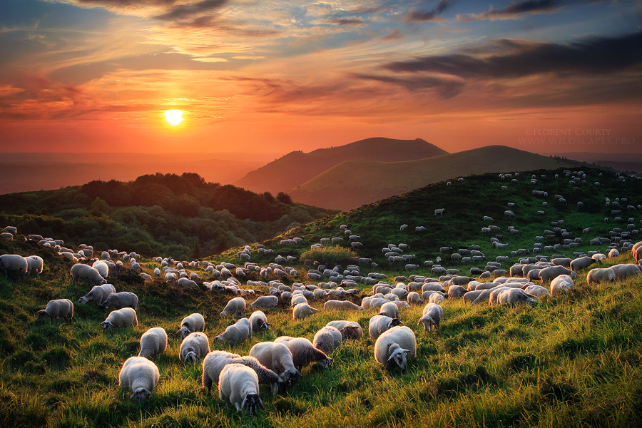 Sheep and Volcanoes by FlorentCourty