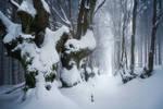Giants in Winter