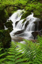 Luxuriant Waterfalls by FlorentCourty
