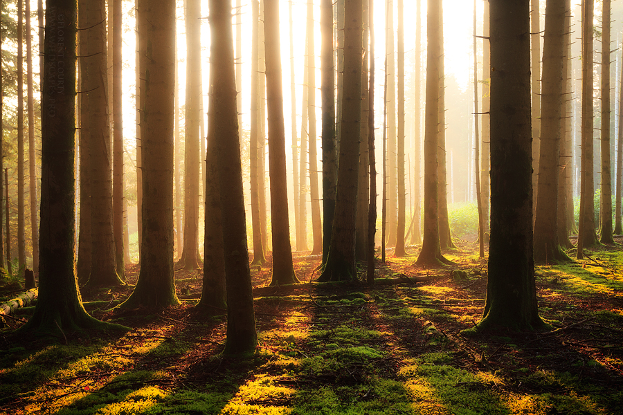 Woods Fantasy by FlorentCourty