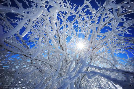 Icy Days