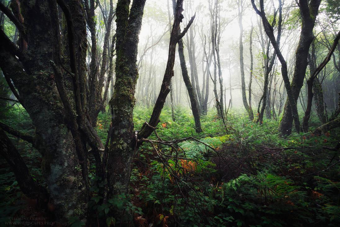 Mystic Blur by FlorentCourty