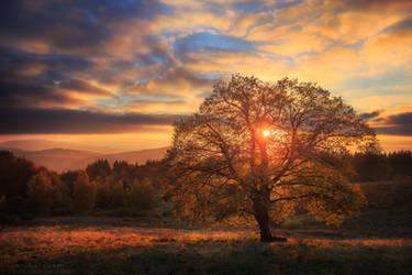 Avatar of Autumn